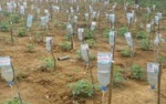 Farmer-Used-Waste-Glucose-Bottles-for-drip-irrigation-system-in-agriculture