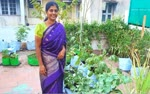 More--vegetable-yield-on-the-terrace-Trichy-housewife-who-overcame-the-lockdown